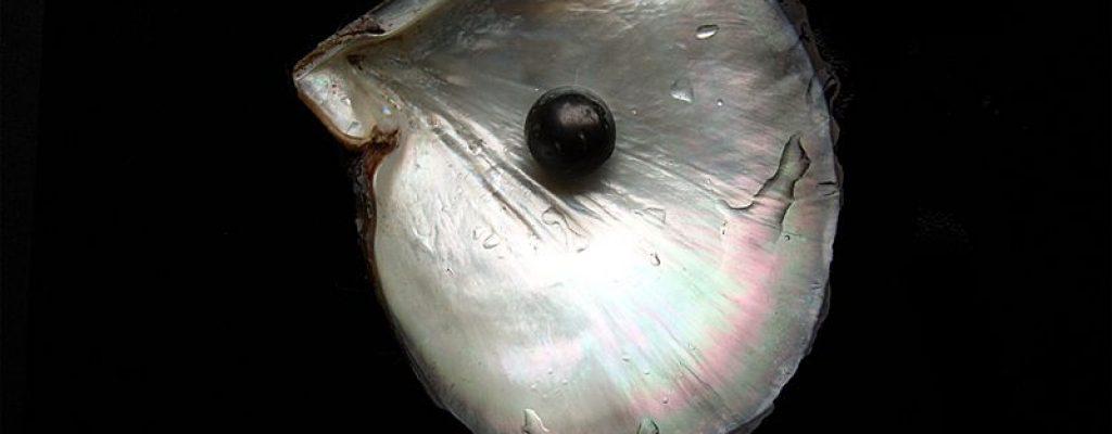 Balck pearl, Wikiwpedia